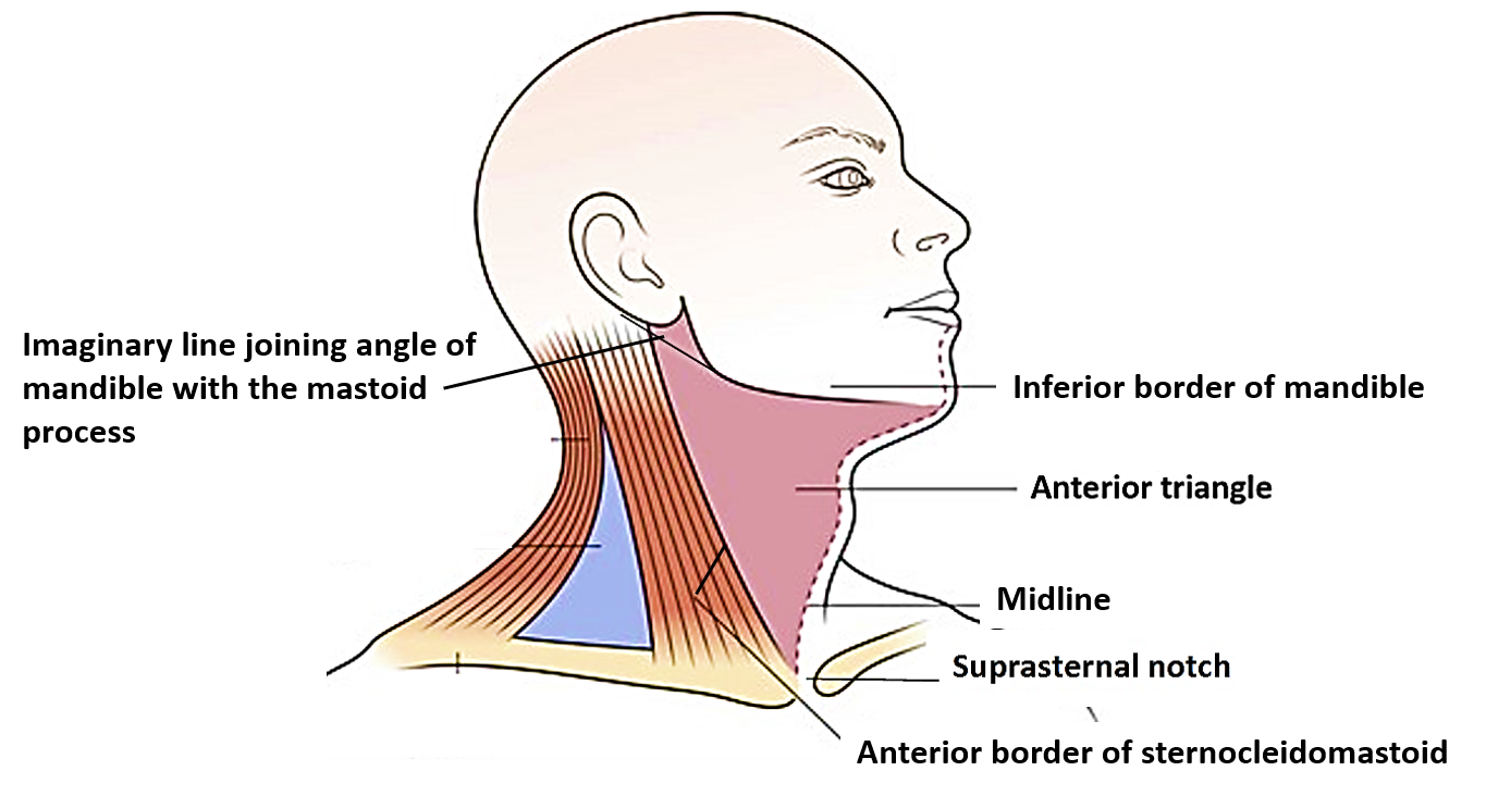 Anterior Triangle of Neck - Submental and Muscular triangles ...