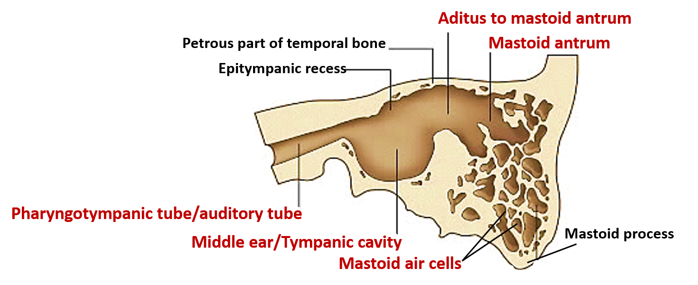 Tympanic Cavity Boundaries Contents And Applied